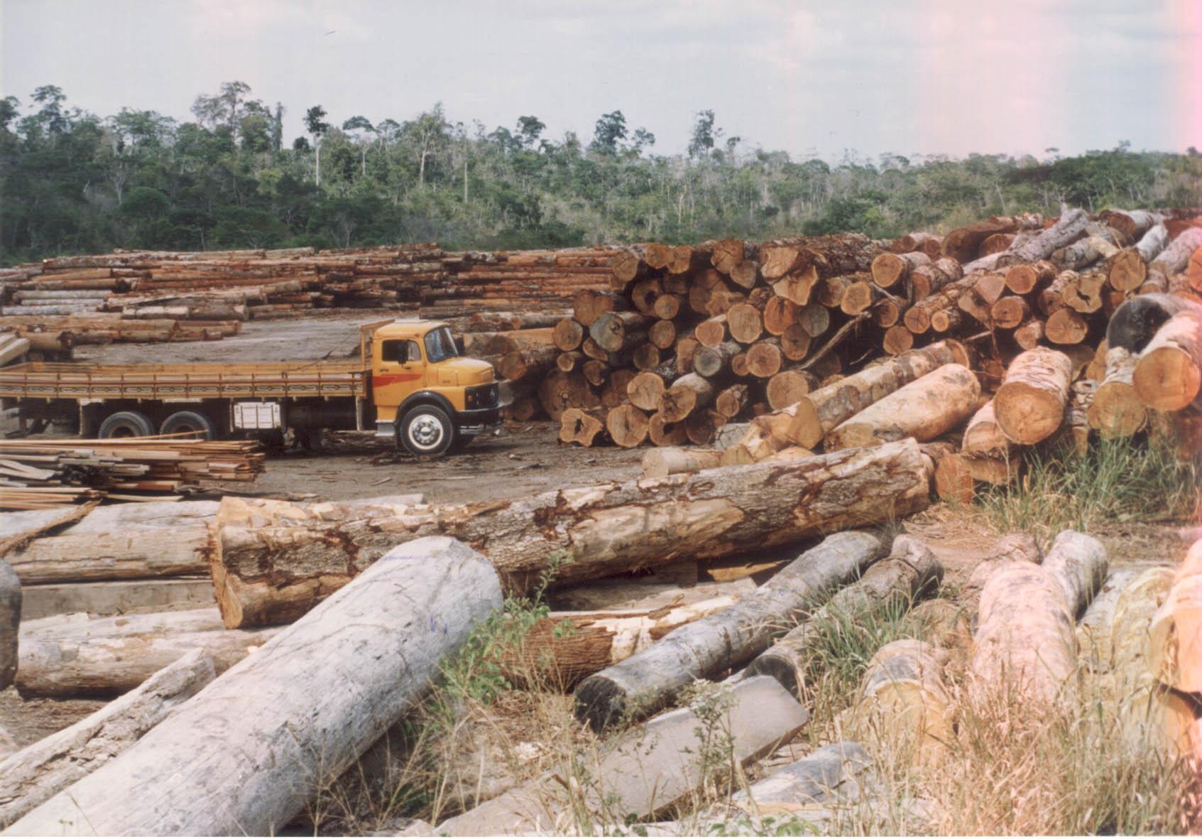 Fotos da amazonia antes do desmatamento 4